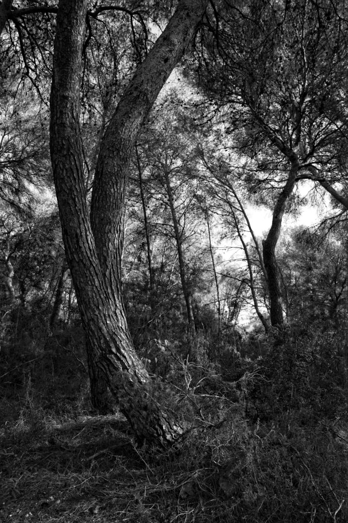 Black and White Photograph of Can Coll Wood by Paco Valera